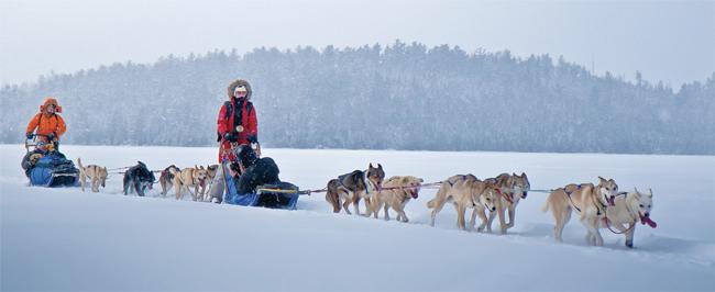 dog-sledding-minnesota